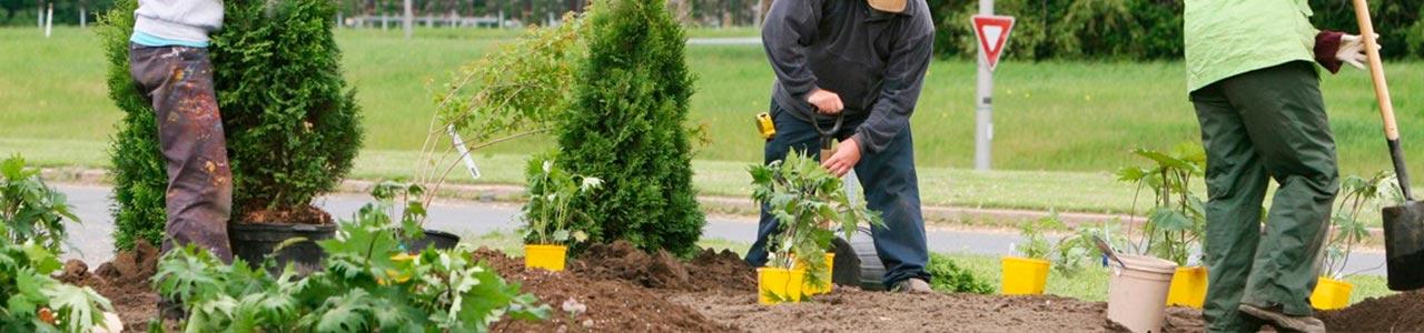 mantenimiento_jardines_slider